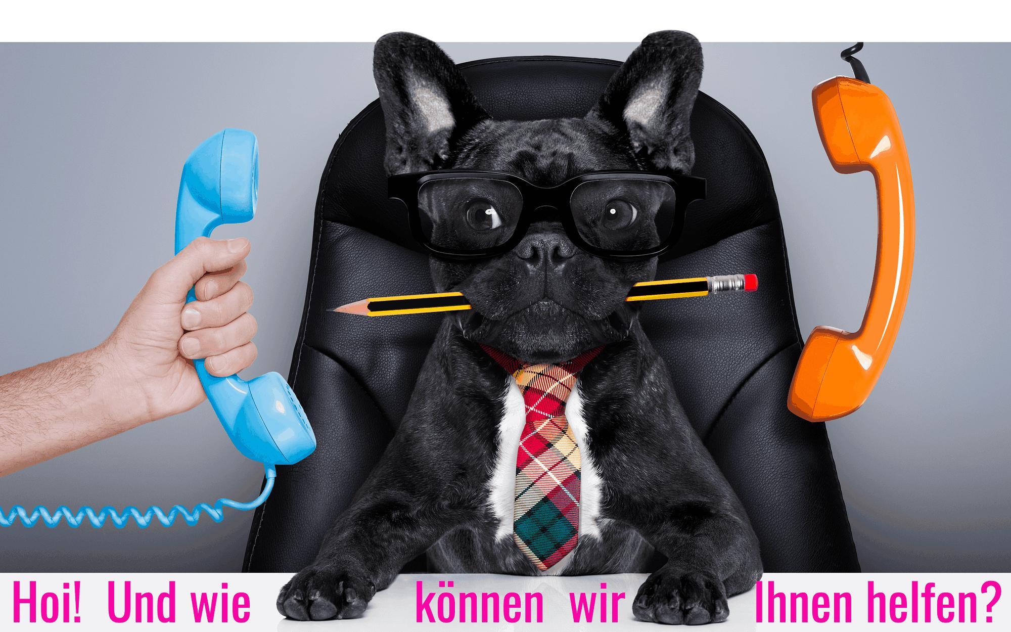 Bürohund mit Telefon